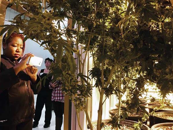 cct-medicineman-grow-tour-plants_2