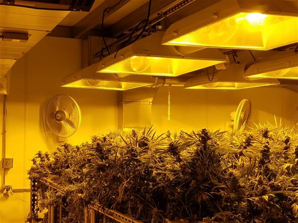 Colorado Cannabis Tours