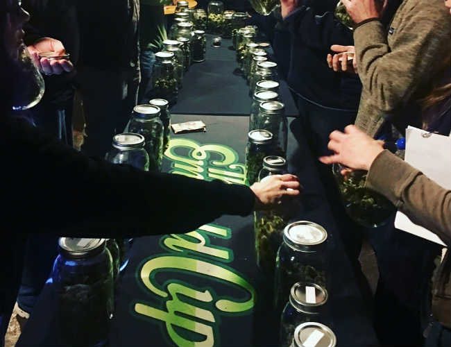 Turnout at the 2017 Emerald Cup