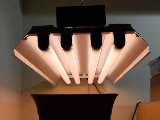 Fluorescent grow bulbs