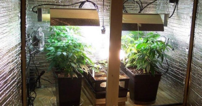 A homemade grow room