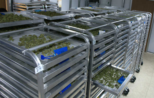 Commercial Cannabis Curing