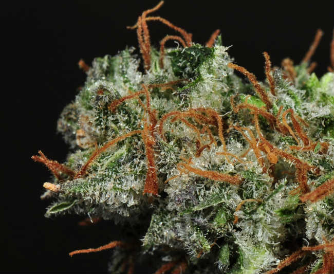 The 8 Best Cannabis Strains for Nausea Relief | Colorado Pot
