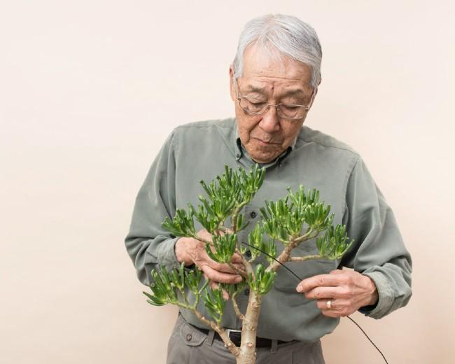 A man threading wire through his bonsai tree