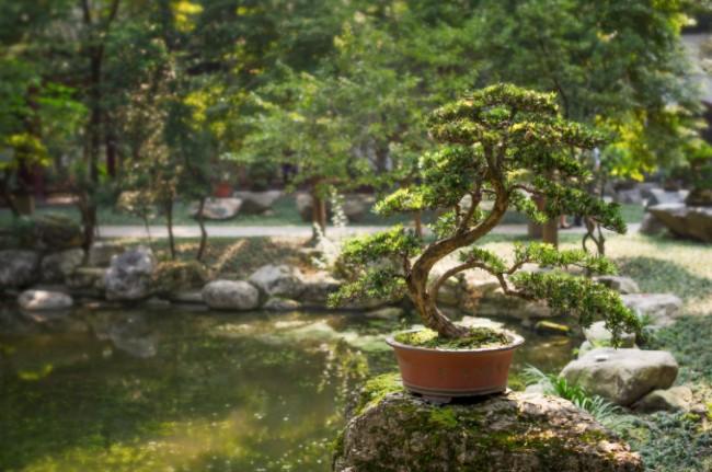A bonsai tree in a garden