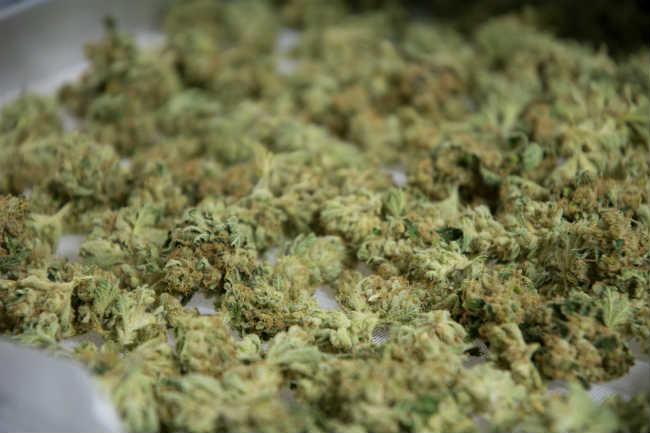 up close weed