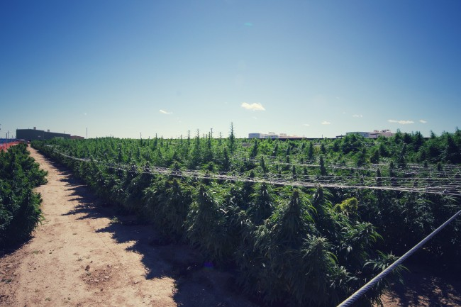Large grow operation