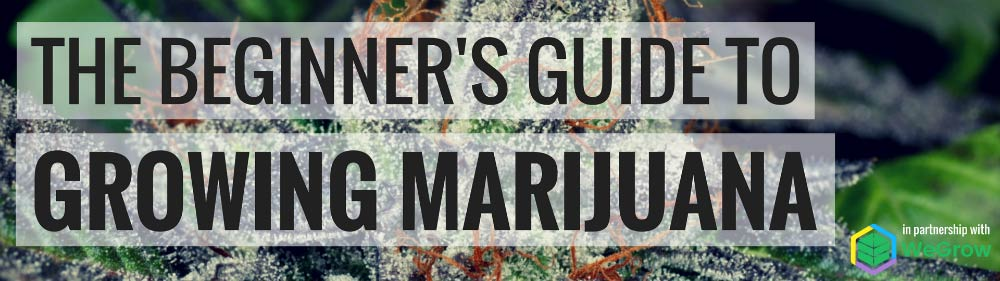 The Beginners's Guide to Growing Marijuana