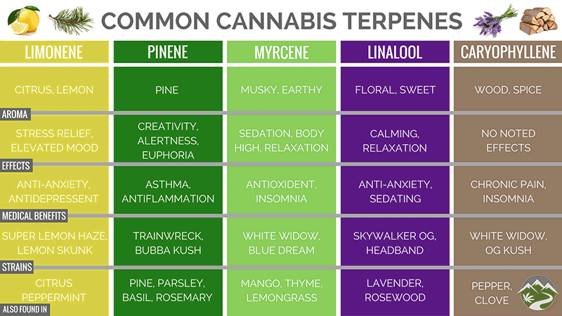 Chart of Terpenes