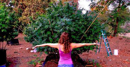 Cannabis LLC