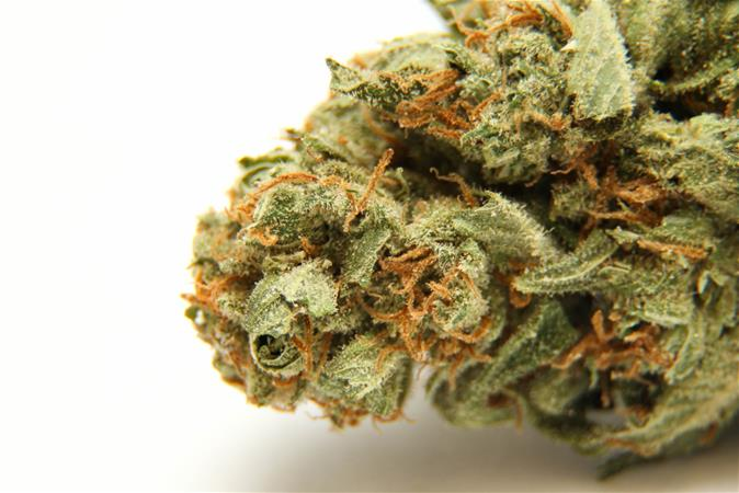 Silver Stem Fine Cannabis | Nederland