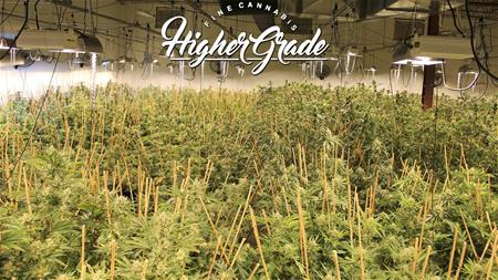Higher Grade - Downtown Recreational