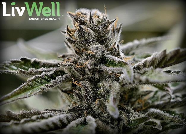 LivWell Enlightened Health - Franklin