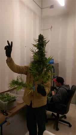 Colorado Cannabis Connection