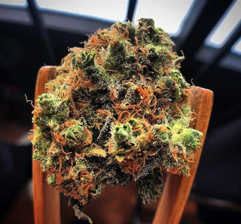 Wolf Pac Cannabis - Colorado Blvd