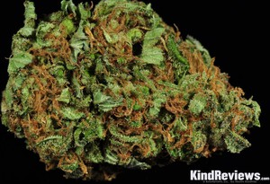 Durban Poison Review | Green Dream Health Services