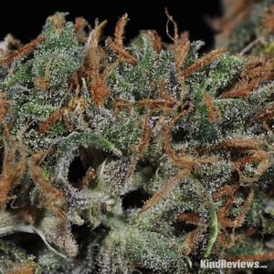 Island Sweet Skunk | Marijuana Strain Library | PotGuide com