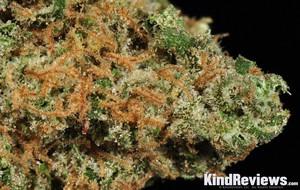 Arcata Trainwreck   Marijuana Strain Reviews   AllBud