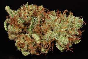 Ak 47 Marijuana Strain Library Potguidecom