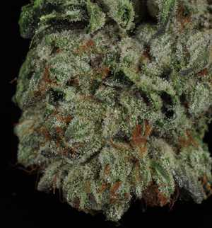 Alien OG | Marijuana Strain Library | PotGuide com