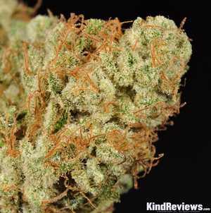 Isaac Haze | Marijuana Strain Library | PotGuide com