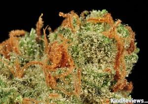 Moonshine Haze Marijuana Strain Library Potguide Com