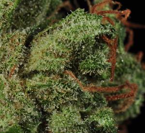Strawberry Haze | Marijuana Strain Library | PotGuide com
