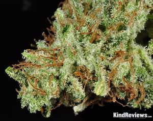 White Widow | Marijuana Strain Library | PotGuide com