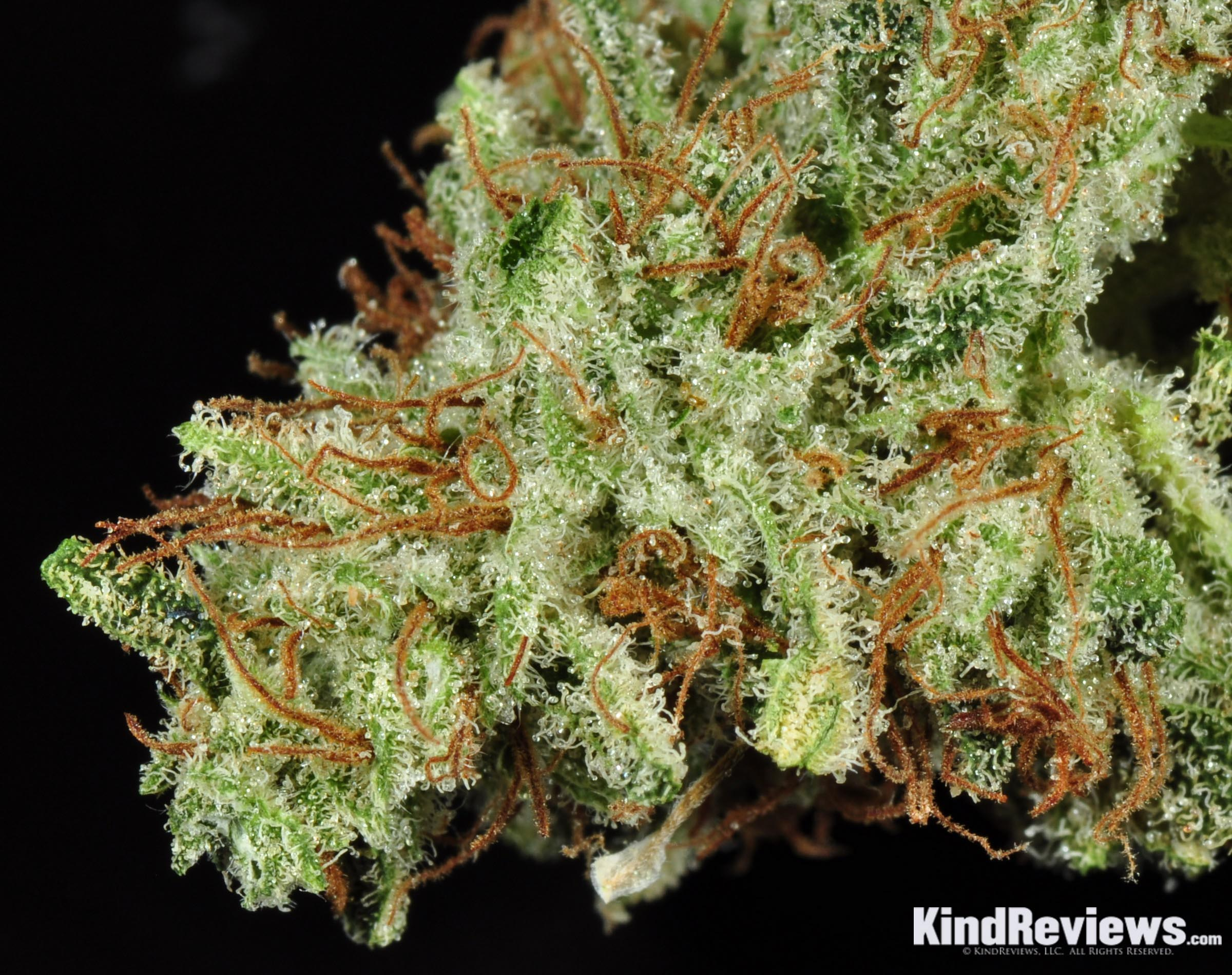 white widow marijuana strain library potguide com