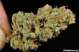 Ghost Train Haze #1 | Marijuana Strain Library | PotGuide com