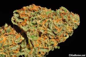 green crack cannabis