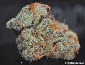 scooby doo weed strain