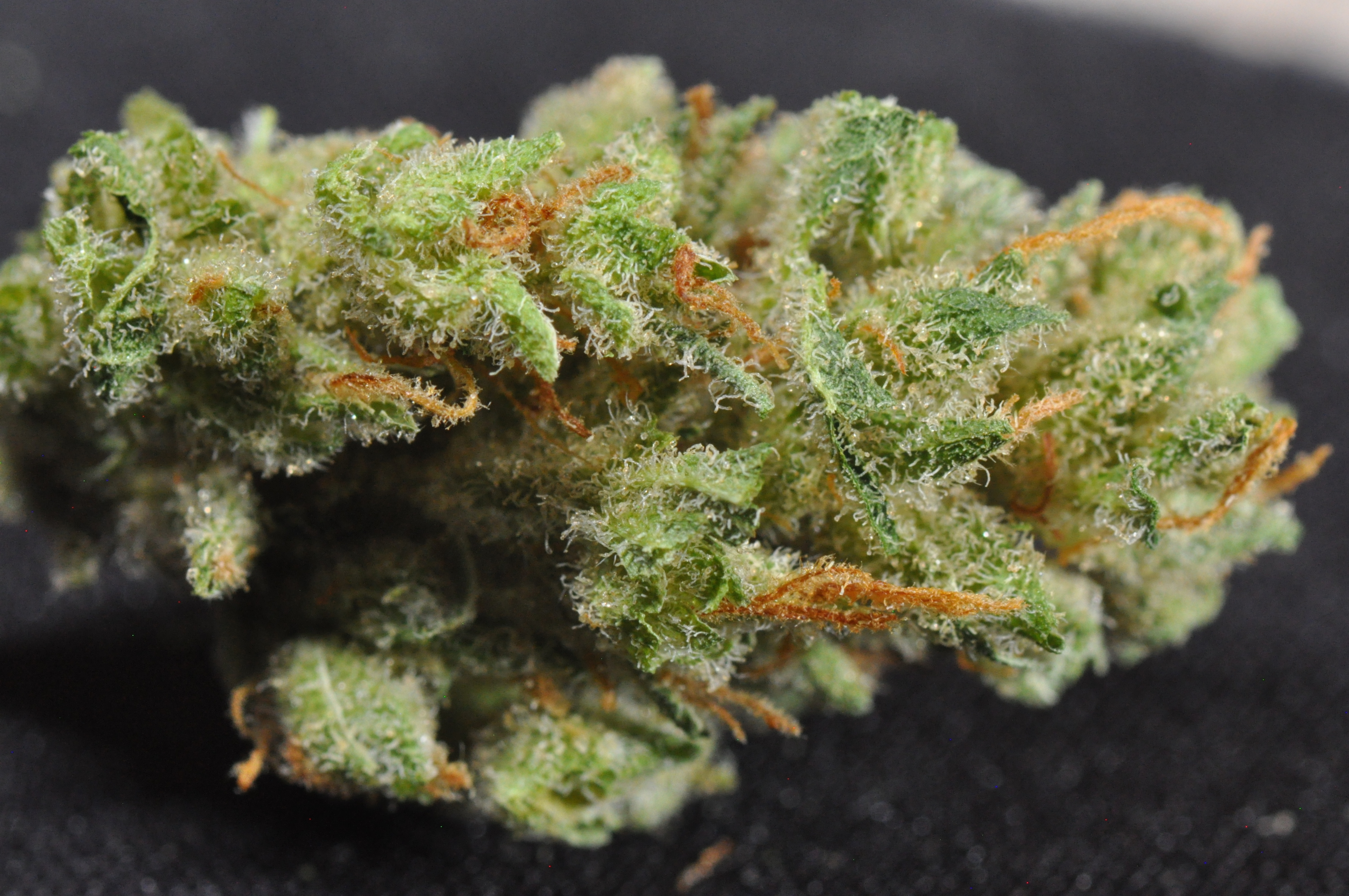 Kyle Kushman's Strawberry Cough