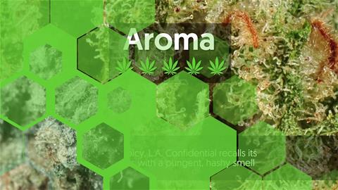 Strain Profile: LA Confidential
