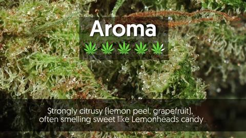 Strain Profile: Super Lemon Haze