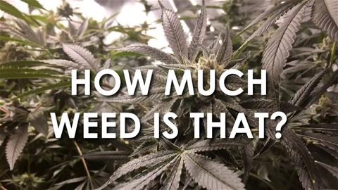 How Much Weed Is That?