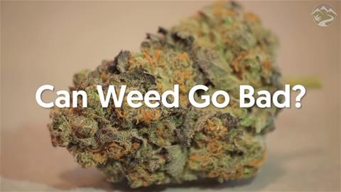 Can Weed Go Bad?