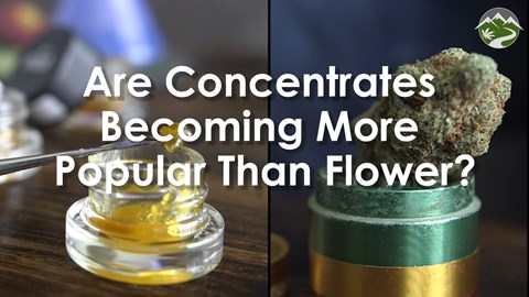 Are Concentrates Becoming More Popular Than Flower?