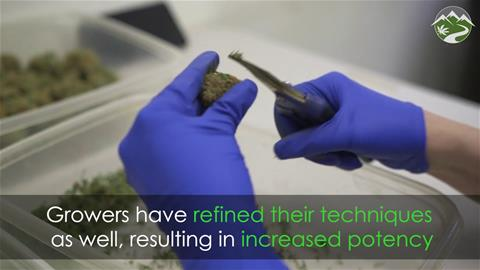 Is Cannabis Really Stronger Than It Used to Be?