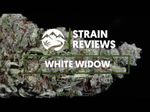Strain Profile: White Widow