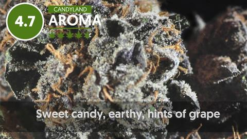 Strain Profile: Candyland
