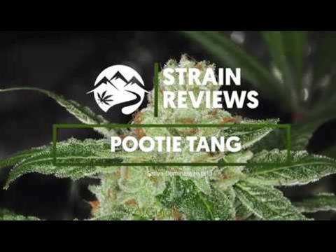 Strain Profile: Pootie Tang