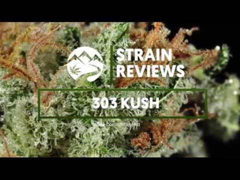 Strain Profile: 303 Kush