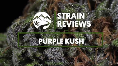 Strain Profile: Purple Kush