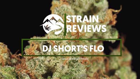 Strain Profile: DJ Short's Flo