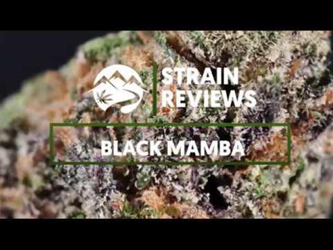 Strain Profile: Black Mamba