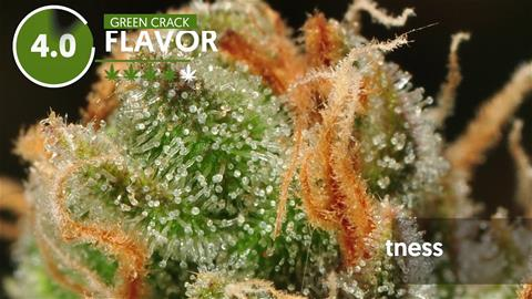Strain Profile: Green Crack