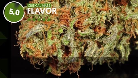 Strain Profile: Critical Mass